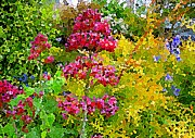 John Tidball  - Coloured Dots in Nature