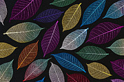 Skeletal Framed Prints - Coloured Leaf Skeleton Pattern Framed Print by Tim Gainey