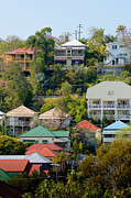 Metal Roofs Posters - Colourful Queenslander houses on a steep hillside  Poster by David Hill