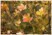 Liz  Alderdice - Colours of Autumn