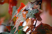 Raindrops Prints - Colours of Fall I Print by Robert Meanor