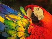 Parrot Pastels Prints - Colours Of The Tropics Print by Linda Weldon