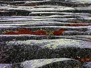 Anne Gordon - Colours of the Tundra 2