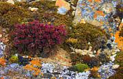 Anne Gordon - Colours of the Tundra 3