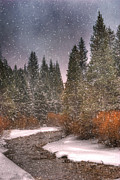 Peaceful Metal Prints - Colours of Winter Metal Print by Juli Scalzi