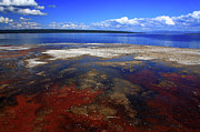 Geysers Photos - Colours Of Yellowstone by Aidan Moran