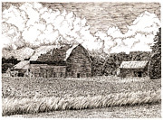 Barn Pen And Ink Posters - Columbia County Cornfield  Poster by Paul Kmiotek
