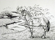 Nature Study Drawings Prints - Comanche Ink Pointillism Study Print by Catherine Henningham Puttick