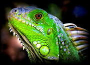 Iguana Metal Prints - Come A Little Closer Metal Print by Karen Wiles