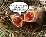 Baby Cardinals Posters - COME BACK Greeting Card Poster by Al Powell Photography USA