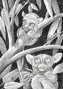 Primate Drawings - Come here my baby tarsier by June Walker