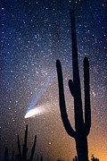 Hale-bopp Comet Framed Prints - Comet Hale - Bopp With Saguaro Framed Print by Douglas Taylor