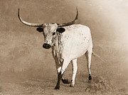 Texas Longhorn Digital Art - Coming Home in Sepia by Betty LaRue