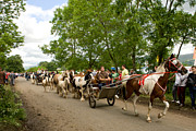Horse And Cart Photo Metal Prints - Coming Through Metal Print by Liz  Alderdice