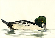 Goldeneye Paintings - Common Goldeneye duck by Juan  Bosco