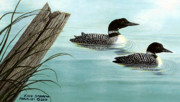 Loon Painting Framed Prints - Common Loons Framed Print by Ellen Strope