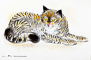 Stripes Pastels Metal Prints - Common mackerel tabby cat Metal Print by Kurt Tessmann