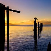 Peta Thames - Comorant Greets the Sun