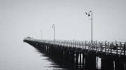 Peta Thames - Comorants on the Pier