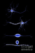 Stimulation Digital Art Posters - Conceptual Image Of A Neuron Poster by Stocktrek Images