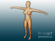 Skin Digital Art Prints - Conceptual Image Of Female Body Print by Stocktrek Images