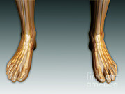 Human Body Parts Posters - Conceptual Image Of Human Legs And Feet Poster by Stocktrek Images