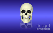 Frontal Bones Framed Prints - Conceptual View Of Human Skull Framed Print by Stocktrek Images