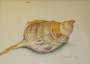 Debbie Nester - Conch Shell