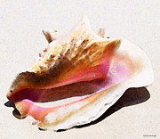 Seashells Digital Art Posters - Conch Shell - Listen Poster by Sharon Cummings