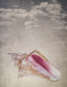 Parchment Posters - Conch shell on vintage background Poster by Jane Rix