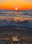 Conch Photos - Conch Shell Sunset by Robert Harmon