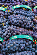 Blue Grapes Photos - Concord Grapes by Mary  Smyth