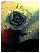 Lee Farley Metal Prints - Concrete rose Metal Print by Lee Farley