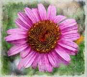 Blooming Digital Art - Cone Flower by Barbara Chichester