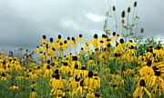 Landscape Photography Pastels - Cone Flower Field by Jackie Novak