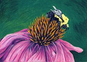 Bee Drawings - Cone Flower with Bee by Troy Argenbright
