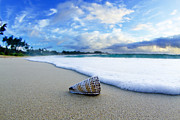 Beach Pictures Prints - Cone Foam Print by Sean Davey