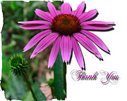 Cone Flower Digital Art Posters - Cone Thank You Poster by Larry Bishop