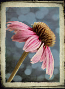 Summer Digital Art Metal Prints - Coneflower Metal Print by Elena Nosyreva