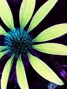 Kathie Mccurdy Prints - Coneflower Lime Abstract Print by Kathie McCurdy