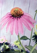 Todd Derr Metal Prints - Coneflower Metal Print by Todd Derr