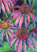 Colored Pencil Drawings Posters - Coneflower Twirl Poster by Kendall Kessler