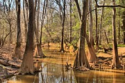 Adam Jewell - Congaree National Park
