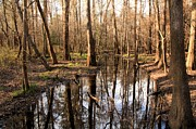 Adam Jewell - Congaree Reflections