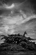 Tree Art Photos - Coniferous Tree by Mark Rogan