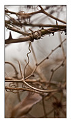 Tendrils Framed Prints - Connections in The Mist Framed Print by Liz  Alderdice