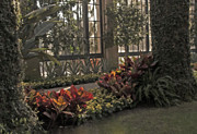 Kimberly Long - Conservatory at Longwood