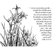 Drawing About God Prints - Consider how the Lilies Grow Print by Janet King
