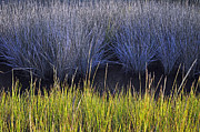 Beach Photographs Art - Contrasting Marsh Grasses on Jekyll Island by Bruce Gourley
