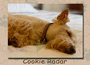 Color_image Prints - Cookie Radar Print by Jean OKeeffe